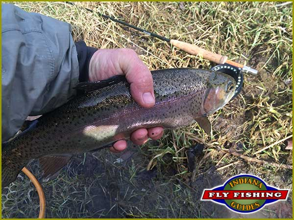 Ed Devine with a Brookville Tailwater rainbow trout