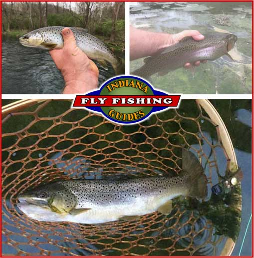 Brookville trout flyfishing