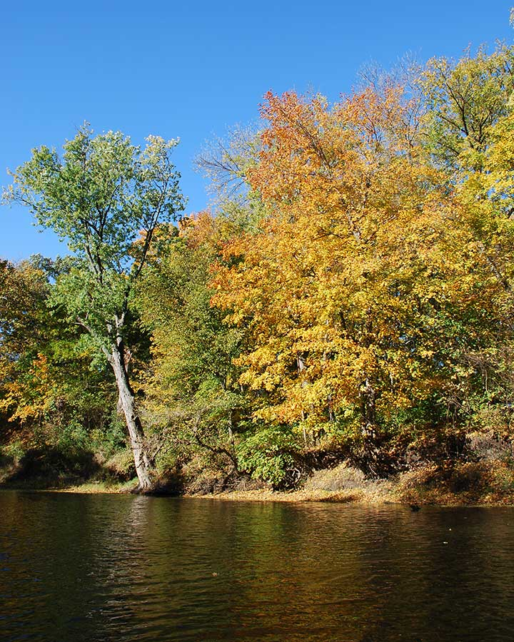 Indiana's West Fork of the White River in Fall - photo by Lisa Metheny
